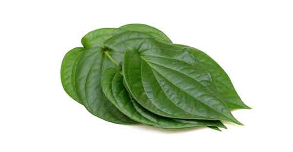 Berikut manfaat daun sirih yang bisa Anda dapatkan